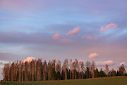 The sunset colors both the birch tree stand and clouds in the background, near Aloja, Latvia Ⓒ Davis Ulands | davisulands.com
