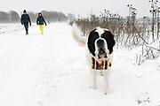 Eerste sneeuwstorm in ruim tien jaar. Het KNMI geeft code rood af. Sneeuwpret in Soest en in de Soesterduinen