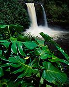 Rainbow Falls, Wailuku River State Park, Big Island of Hawaii.