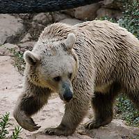 Fauna - Bears