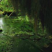 Pond in the Hoh Rain Forest, in Olympic National Park, WA.