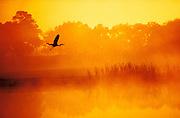 1990_Heron