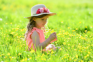 24th May <br />Dorrie Cunningham 6yrs  from Epsom enjoys the buttercups on a school break  Bank Holliday weekend