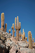 Cacti in Turipite Village, Atacama Desert, Chile, South America