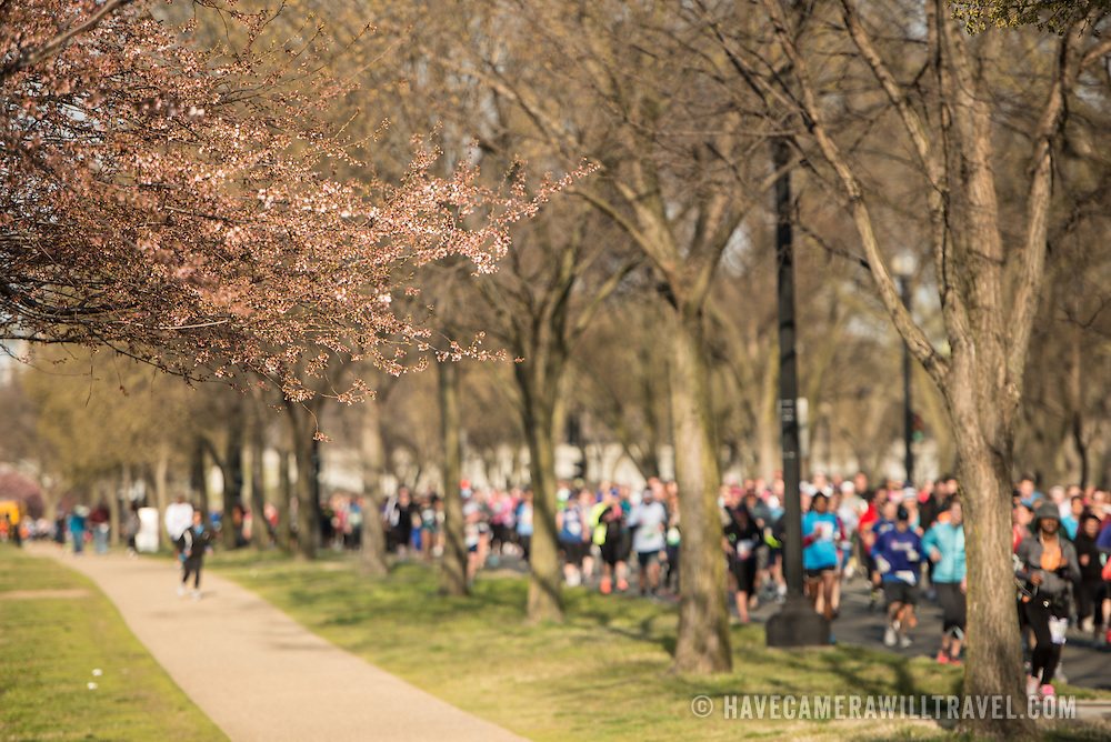Runners in the 2013 Cherry Blossom 10-Mile Run. Scheduled to coincide with the National Cherry Blossom Festival in early spring, the race takes runners along the National Mall and by the famous cherry blossoms around the Tidal Basin. At left of frame are some of the very early cherry blossoms.