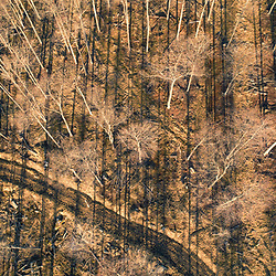 Drone view of dirt road in a forest near Catherine Swamp in Hazelhurst, Pennsylvania.