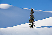A tree stands alone, surrounded by a blanket of fresh snow, near Paradise, Mount Rainier National Park, Washington.