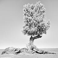 The seasonal desert I