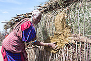 Maasai woman applies mud to a reeds hut Photographed in Kenya