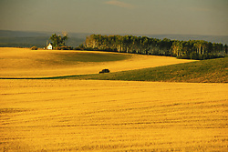 Horizontal image of grainfields near Driggs, Idaho, with trees and white house in background
