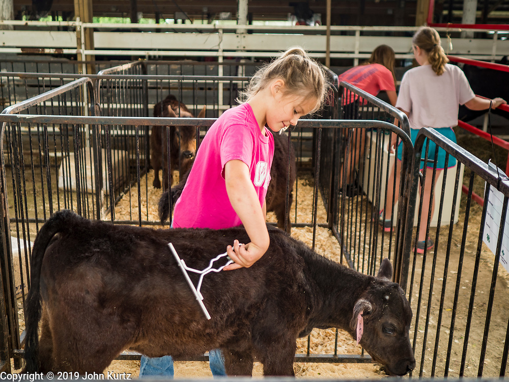 26 JUNE 2019 - CENTRAL CITY, IOWA: McKINZE FAGLE grooms her bottle bucket calf in the barn at the Linn County Fair. Summer is county fair season in Iowa. Most of Iowa's 99 counties host their county fairs before the Iowa State Fair, August 8-18 this year. The Linn County Fair runs June 26 - 30. The first county fair in Linn County was in 1855. The fair provides opportunities for 4-H members, FFA members and the youth of Linn County to showcase their accomplishments and talents and provide activities, entertainment and learning opportunities to the diverse citizens of Linn County and guests.       <br /> PHOTO BY JACK KURTZ