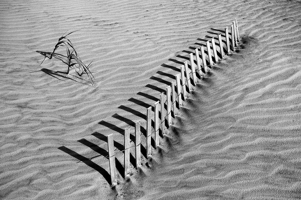 Sand Fence #2, Foley Beach, Charleston, SC
