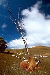 Devastation Trail and Pu`u Pua`i cinder cone, Hawaii, USA Volcanoes National Park, Big Island, Hawaii, USA