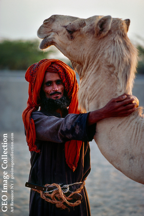 One of the last of a dying culture, a Bedouin tribesman tends his camel in the desert near the ruins of the Dilmun civilization in Bahrain.  Sociologists say that by the early twenty-first century, the nomadic Bedouin have been fully assimilated into modern world where Western and Arab cultures coexist.