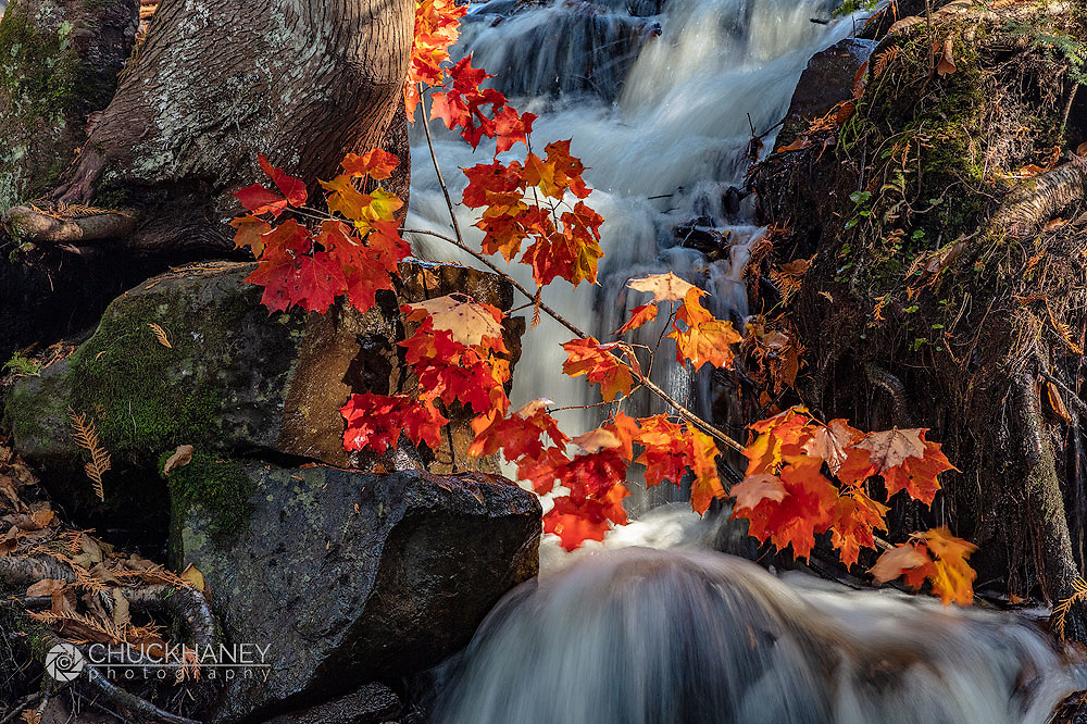 Red Maple Leaves in Cascade at Bond Falls State Park, Michigan, USA