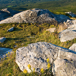 Goldenrod blooms on the summit of Mount Monadnock in New Hampshire's Monadnock State Park.