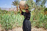 Berber woman carrying grass bundle on her head.