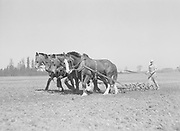 9969-2963. Spring tooth harrowing a field on the Hagg brothers farm. May 1, 1937. near Reedville, Oregon