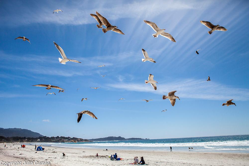 Seagulls fly above a beach in Carmel, CA.