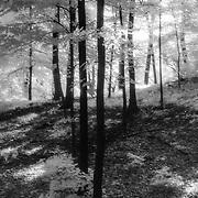 Daybreak<br /> Study in Infrared