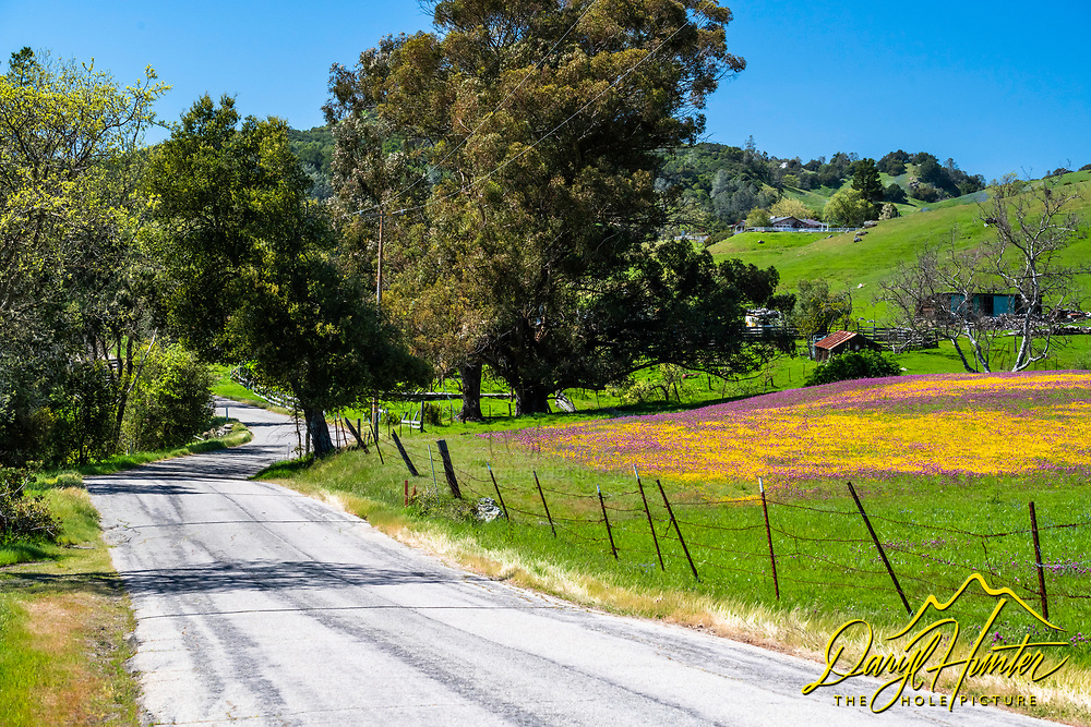 Country Road winding through the farms and wildflowers in San Luis Obispo California