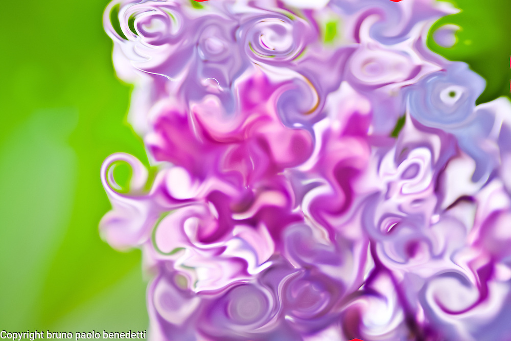 lilac color of the nature in abstract flower on blurred green background in spring season.