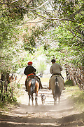 Back view of Gaucho's on horseback and dog in tree lined lane, Estancia Huechahue, Patagonia, Argentina, South America