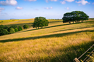 Landscape of the South Downs in southern England with long grass and fields on a summers day.