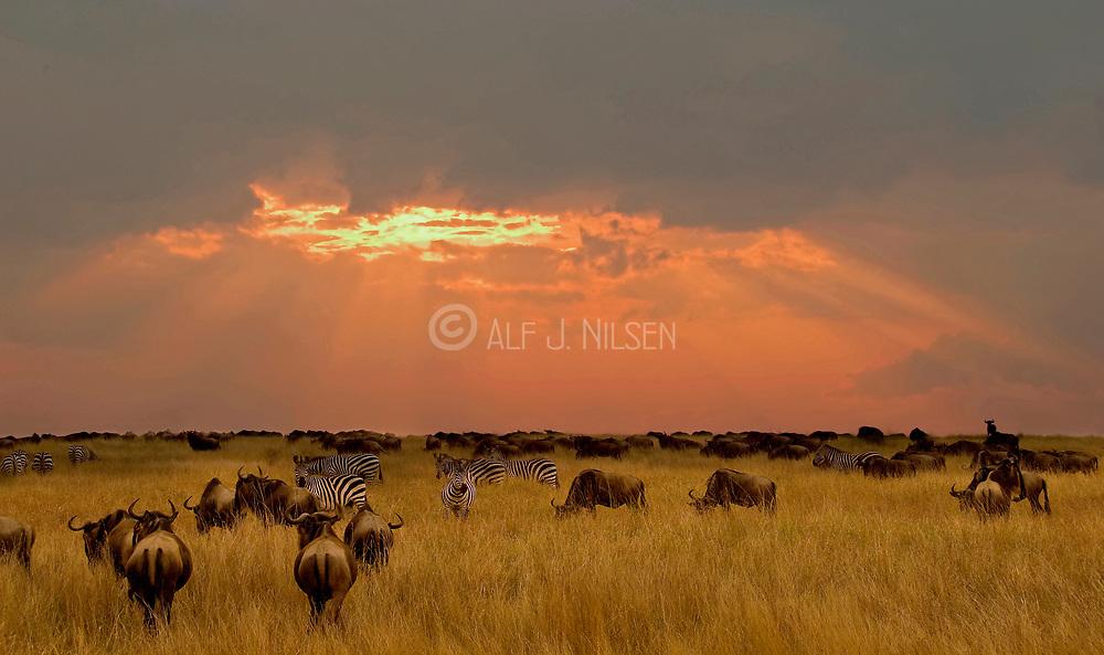 Sunset over Maasai Mara.