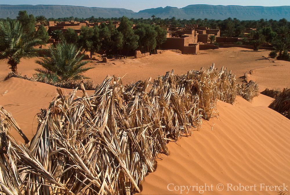 MOROCCO, SAHARA DESERT desertification; holding dunes with fences to save desert village in Dra River Valley, near Zagora