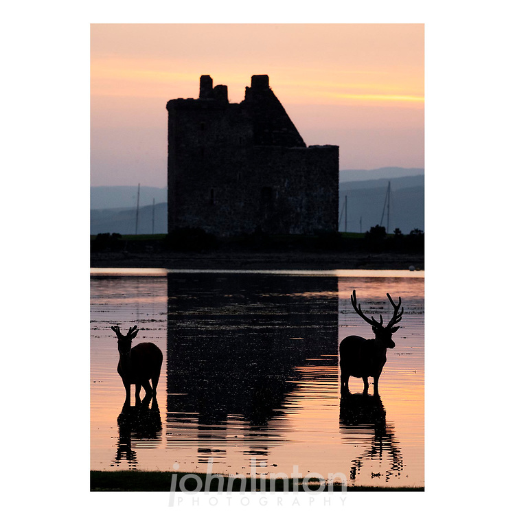 Midsummer Stags<br /> <br /> Stags in Lochranza as the sun sets on the longest day of the year.<br /> <br /> Covid staycationers are being treated to unusual sights of nature in Lochranza on the Island of Arran, as the wildlife is more relaxed than normal, possibly due to the lack of visitors during the lockdown.<br /> <br /> Pictured - stags in the water in front of Lochranza castle<br /> <br /> John Linton Photography <br /> John@lintonpix.com<br /> 07986592673<br /> <br /> © John Linton 2021<br /> All rights reserved<br /> Fee must be paid for any usage<br /> Please respect the photographer<br /> NO SYNDICATION<br /> ALL BREACHES OF COPYRIGHT WILL BE PURSUED