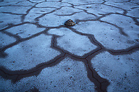 Cracked mud patterns, Death Valley National Park, California, USA
