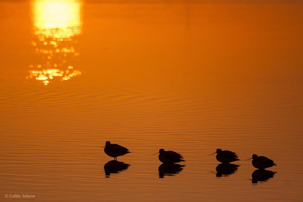 Salton Sea State Recreation Area, California, USA.