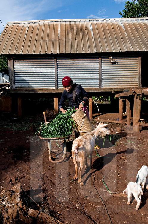 A vietnamese farmer feed her goats, Pleiku area, Vietnam, Southeast Asia