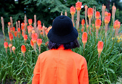 A visitor to Kew Gardens in west London looks at Kniphofia, also known as Red Hot Poker, planted along the Broad Walk Borders.