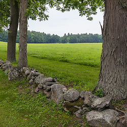 Trees and a stone wall mark a field boundary at Clarke Farm in Epping, New Hampshire.