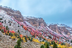 Fall Colors, Swan Valley Idaho