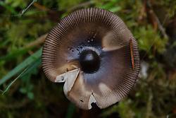 Mushroom, Prevost Island, Gulf Islands National Park Preserve, British Columbia, Canada