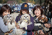 """Three Korean dog owners with their styled Pekingise dogs at """"Herb Island"""" an amusement park located in Pocheon not far away from the Korean capital Seoul."""