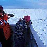 Polar Bear(Ursus maritimus)Sylvia Novotny photographs bears with Dad. Churchill, Manitoba. Canada.