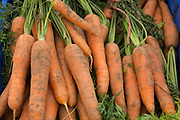Organic carrots. Local community Sunday market in the village of Husthwaite, North Yorkshire, England, UK. Over 20 stalls with a mixture of old favourites and new stalls lelling locally made products.