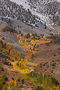 Eastern Sierras.  Hilton Creek Drainage, Fall Colors, and First Snow