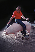 Greg Bartz, a Minnesota farmer sprays a synthesized boar pheromone at a sow he will artifically inseminate with the spirette in his left hand.<br /> Greg Bartz, a Minnesota farmer sprays a synthesized boar pheromone at a sow he will artifically inseminate with the spirette in his left hand.