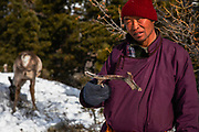 A Tsaatan man holding his reindeer's shed antler up in the mountains, Khovsgol Province, Mongolia