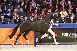 577 - Governor STR<br /> KWPN Stallion Selection - 's Hertogenbosch 2014<br /> © Dirk Caremans