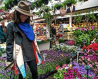 Amsterdam, Marché aux fleurs