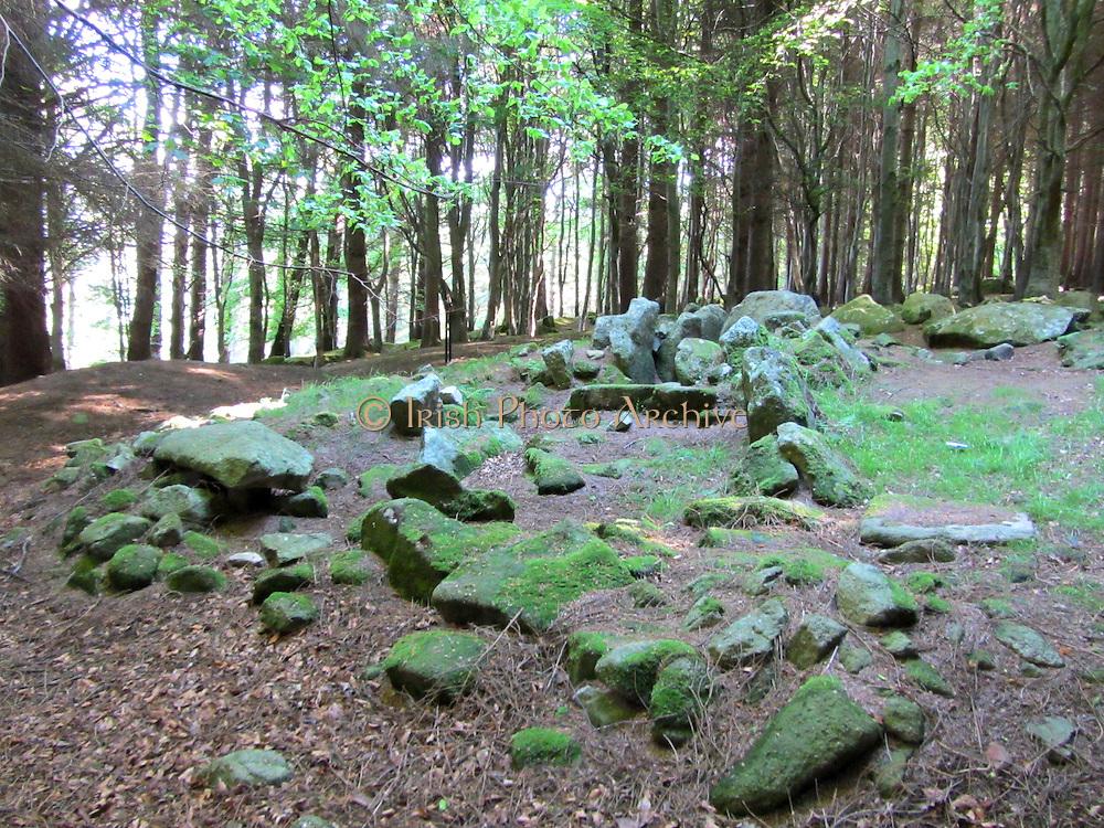 Kilnashogue, IMG_3076, moss, forest, woods, wood, spring,