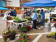 23 MAY 2020 - AMES, IOWA: People wearing face masks shop at an ornamental flower stand at the Farmers' Market in downtown Ames. The Ames Main Street Farmers' Market reopened Saturday after nearly a month of only online sales because of Iowa's bans on large gatherings caused by the COVID-19 pandemic. Only about 15 venders set up stalls Saturday and attendance was significantly lower than normal. All of the venders wore face masks and many, but not all, of the shoppers wore face masks. Farmers' markets are popular community gatherings in Iowa, but they've been on hiatus since the Coronavirus (SARS-CoV-2) pandemic. At this time, Iowa farmers' markets are not allowed to have entertainment or sell non-food or non-agricultural goods.         PHOTO BY JACK KURTZ