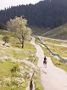 A man riding a horse down a road in the hills near Gulmarg, Kashmir, India