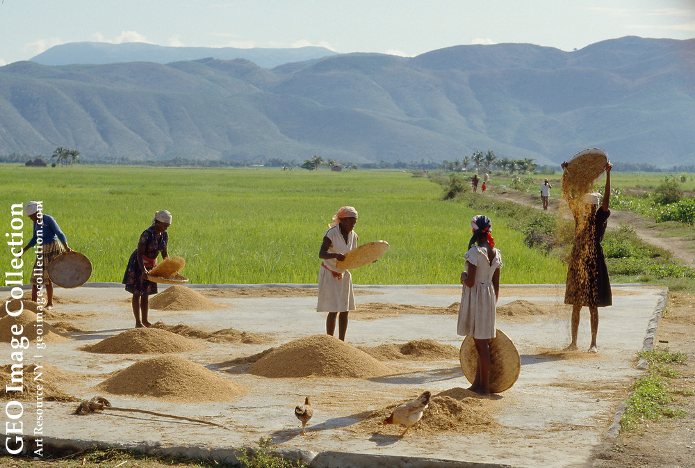 Rice smuggled from the United States threatens local farmers.